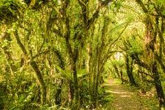 Chemin de Forrest Photo libre de droits