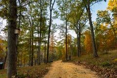 Chemin de Forrest dans les montagnes d'Ozarks du Missouri image libre de droits