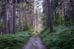 Chemin de Forrest de paix et de beauté Photos stock