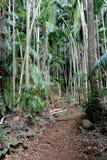 Chemin 7 de forêt tropicale Photographie stock
