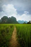 Chemin de gisement de riz Photo libre de droits