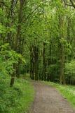 Chemin de gravier dans le bois dur photos stock