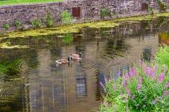 Chemin de halage de canal du Delaware et oie, nouvel espoir historique, PA photographie stock libre de droits
