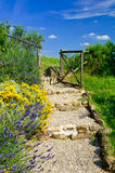 Chemin de jardin Photo stock