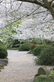 Chemin de jardin Images stock