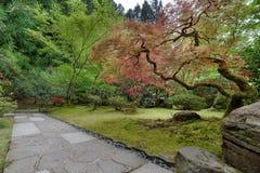 Chemin de jardin avec des arbres d'érable japonais Images stock