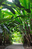 Chemin de jardin en bois de Heliconia Photo libre de droits