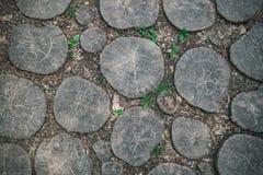 Chemin de jardin pavé avec des planches de chêne Images stock