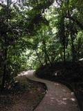 Chemin de jungle à travers le site maya de Palenque Photos stock