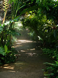 Chemin de jungle photographie stock
