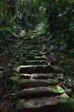 Chemin de jungle image stock