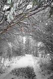 Chemin de l'hiver Images libres de droits