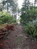 Chemin de la forêt photographie stock