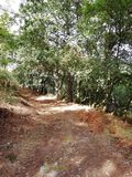Chemin de la forêt en Au photographie stock