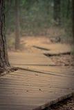 Chemin de la vie Photo stock