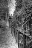 Chemin de lierre Photographie stock
