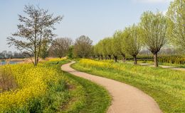 Chemin de méandre dans le printemps photo stock