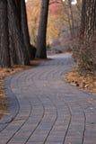 Chemin de machine à paver à travers les arbres en automne Photo stock