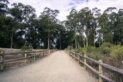 Chemin de marche à travers un verger d'arbre d'eucalyptus en plage de Pismo, la Californie où les papillons de monarque émigrent  images libres de droits
