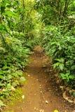 Chemin de marche à travers une forêt tripical luxuriante Photo stock