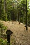 Chemin de marche boisé Image libre de droits