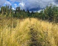 Chemin de marche dans l'herbe jaune lumineuse grande Image stock
