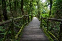 Chemin de marche dans la forêt tropicale chez Doi Intanon, Image libre de droits