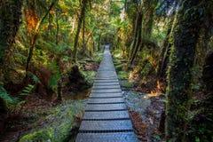 Chemin de marche dans la forêt tropicale de montagne au lac de matheson important Photos libres de droits