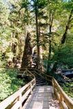 Chemin de marche de forêt images libres de droits
