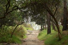 Chemin de marche de forêt Photographie stock