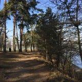 Chemin de marche en bois Image stock