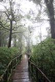 Chemin de marche pluvieux Photo libre de droits