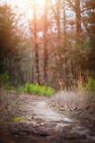 Chemin de marche de traînée Photographie stock libre de droits