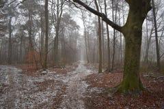 Chemin de Milou dans la forêt images stock