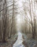 Chemin de Milou entre les arbres Photos libres de droits