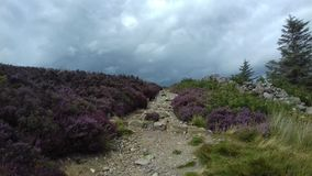 Chemin de montagnes de Wicklow Photographie stock libre de droits