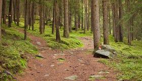 Chemin de Montain Photo stock
