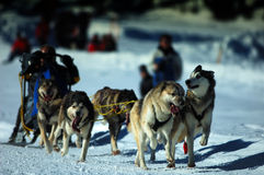 chemin de musher Photographie stock libre de droits