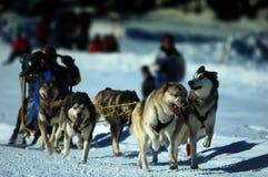 chemin de musher Photographie stock libre de droits