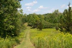 Chemin de nature en été Photographie stock libre de droits