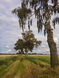 Chemin de nature en Pologne du nord Photos libres de droits