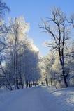 Chemin de neige Image stock