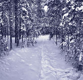 Chemin de neige en forêt de l'hiver Image libre de droits