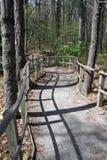 Chemin de passage couvert de course dans la forêt Image stock