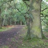 Chemin de pied à travers les bois Photographie stock