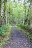 Chemin de pied de région boisée à travers les bois Image stock