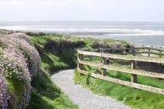 Chemin de promenade de falaise et fleurs sauvages dans le ballybunion Photographie stock