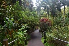 Chemin de promenade menant par une forêt tropicale tropicale luxuriante photos libres de droits