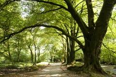 Chemin de régfion boisée Image stock