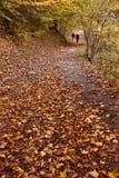 Chemin de régfion boisée d'automne Photo stock